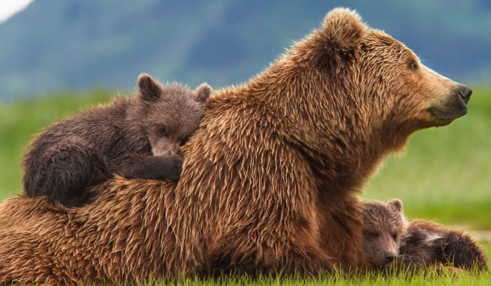 os-disneynature-bears-20140417